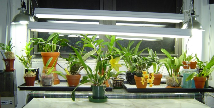Types Of Orchids You Can Grow With LED