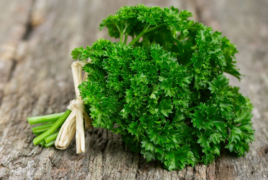 Parsley For Heartburn Relieve